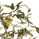 darjeeling-phugury-white-downy-luxury