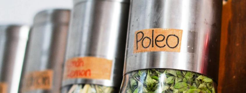 thé-poleo